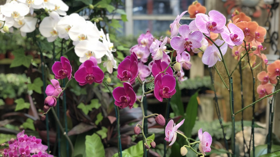 Million Orchid Project takes over Coconut Grove